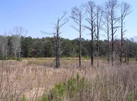 Wetland and Stream Mitigation Banks
